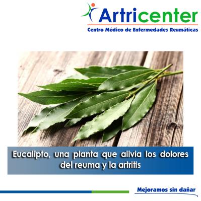 eucalito-ARTITIS-ARTRICENTER-BLOG