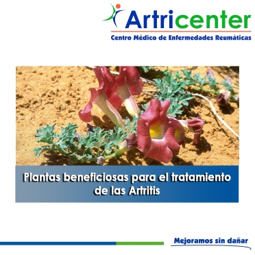 Plantas beneficiosas para el tratamiento de las Artritis-artricenter