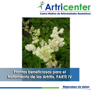 Plantas beneficiosas para el tratamiento de las Artritis PARTE IV-artricenter