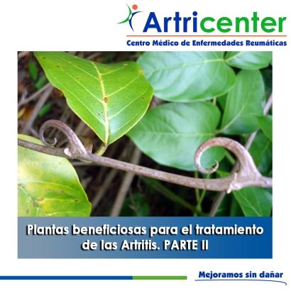 Plantas beneficiosas para el tratamiento de las Artritis. PARTE II-artricenter
