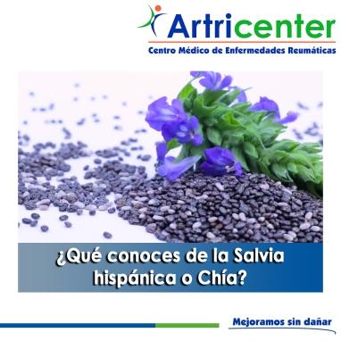 Qué conoces de la Salvia hispánica o Chía-artricenter